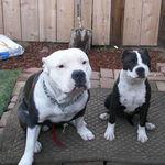 Daniel Big baby Blue,  & friend Kala