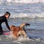 daniel and his dog sadie
