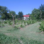 Darrell and Kelly&#39;s Vineyard