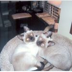Wayne's beloved siamese buddies, Anastasia and Alexander, 2010