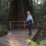 2009 Tree Top Walk Australia