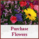  Click Here to Order Flowers, Sympathy Cards & Unique Gifts 