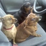 dads dogs winnie bella emma, and the late plutoxoxo