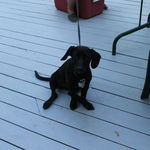 "Deb loved labs! Montanna (""Dakota"")  Jazz - she was a huge animal lover! Especially labs! This was a puppy at Matt's graduation party."