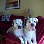 Her beloved doggies... Oliver & Ivan