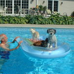 Amber and Rocky with Stoney in the pool - Just Chillin'