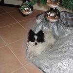 Stoney's brother Juan Carlos, on the 1st Christmas of Juan's adoption!