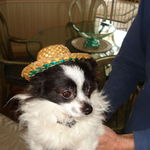 Stoney's little mexican adopted brother in an original sombrero repaired by his friends De and Teresa. I love it!!!!!