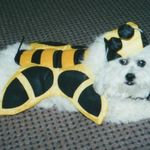 Stoneybug in his ever famous Bumble Bee Costume!