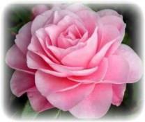 Rose N. Miressi obituary photo