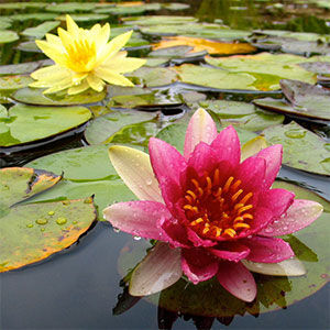 Betty June Carpenter