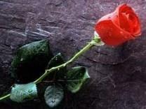 Emily Rose Sambuco obituary photo