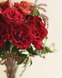 Elissa Rothofsky obituary photo