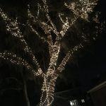 Gary's tree of hope!
