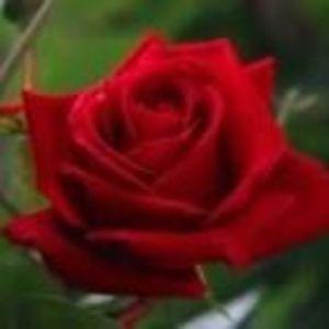 Rose Virginia Horton