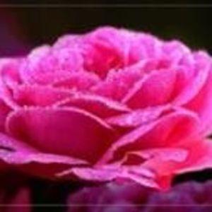 Rose Maniscalco