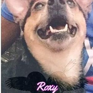 Roxy (Roxy-Doxy, Fat Girl, Tap-Tap) Tucker