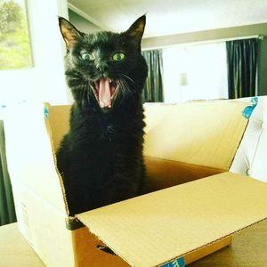 Theta (Kitty) Cline