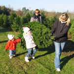 Margaret's grandkids and Frank picking at Christmas trees Holidays 2006 -- before the snow.
