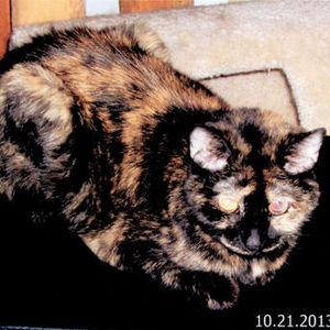 Boo Kitty Ostrowski