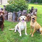 Buddy with Dexter and Crushy