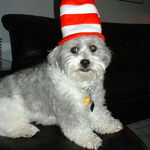 Stoney in his latest role in Seussical The Musical!!