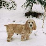 Biskitt was a snow bunny at heart.