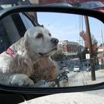 She loved to ride in the car, her long ears flapping in the wind.