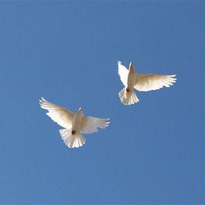 U.S. Marine, Navy Plane Crash Victims Obituary Photo